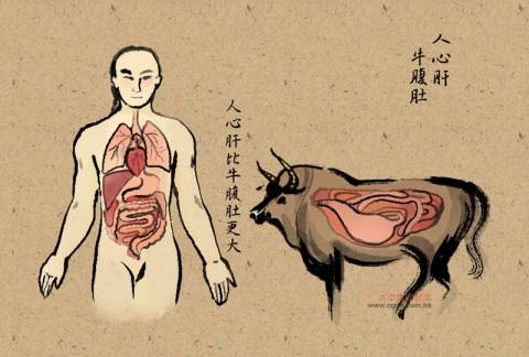 台湾俚语:人心肝,牛腹肚