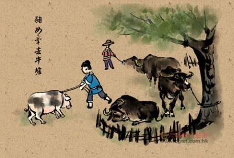 猪母牵去牛墟